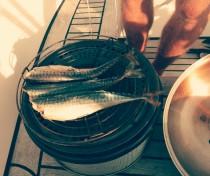 Vers gevangen makreel roken op de bbq